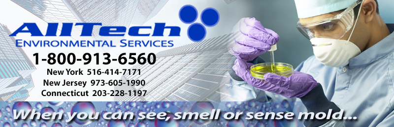 Free consultation for mold testing ny, mold testing nj and mold testing ct and mold removal